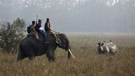 uttarakhand hc declares animal kingdom  legal entity