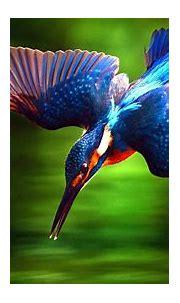 Free photo: Kingfisher Bird - Animal, Bird, Closeup - Free ...