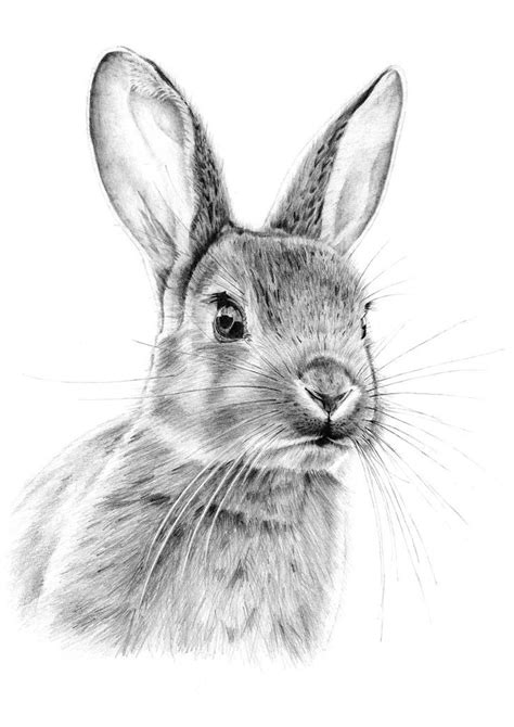 ideas  rabbit drawing  pinterest rabbit