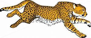 Running Cheetah stock vector - Clipart.me