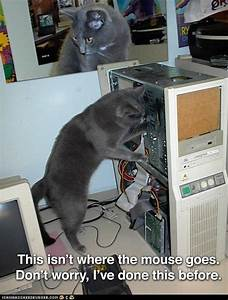 17 Best Images About Cats In The Office On Pinterest