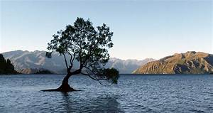 Daily Weekly Schedule Quot The Tree Quot Lake Wanaka Nz A Hidden Gem Of New Zealand