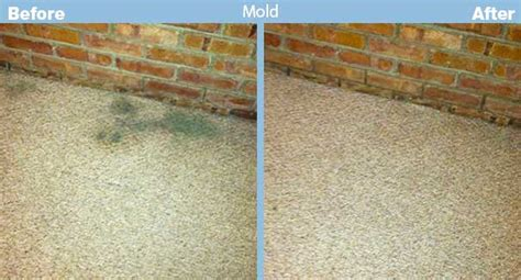How To Shoo A Rug by How To Kill Mold In Carpet