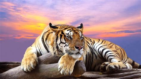 Animal Wallpaper App - animals live wallpaper android apps on play