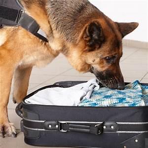 police dogs dog breeds k9 unit law enforcement
