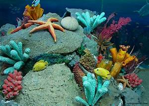 Sea-life Images | Beautiful Cool Wallpapers