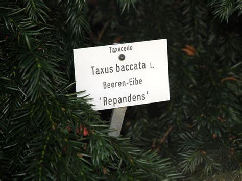 Garten Pflanzen Beschriften by Was Bedeutet Botanik Botanische Systematik Namen Und