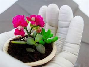 Pflanzen Kübel Beton : diy gartentipps gips gie en hand als pflanzen schale beton und garten pinterest ~ Sanjose-hotels-ca.com Haus und Dekorationen