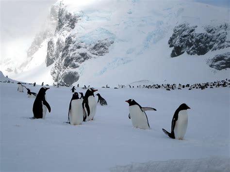 poop reveals penguins  return  erupting volcano