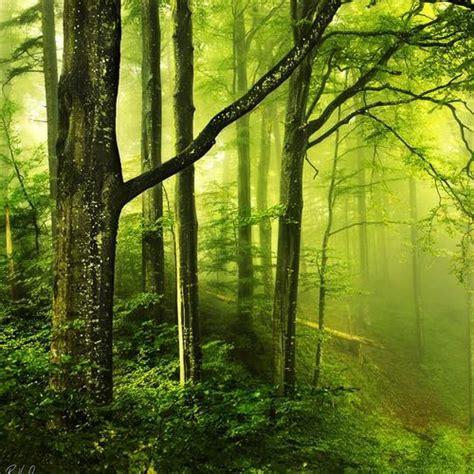 hutan gambar animasi  android apk