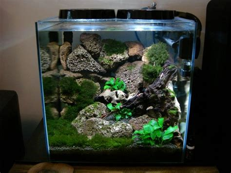 Aquascape Shrimp Tank by Shrimp Tank Aquascape Planted Tank Aquascaping
