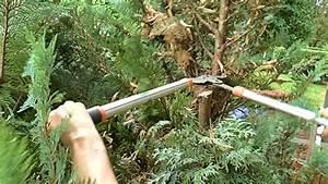 Thuja Hecke Abstand : we cut today thuja hedge wir schneiden heute thuja hecke youtube ~ A.2002-acura-tl-radio.info Haus und Dekorationen