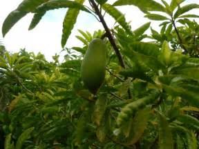 Rainforest Fruit Trees