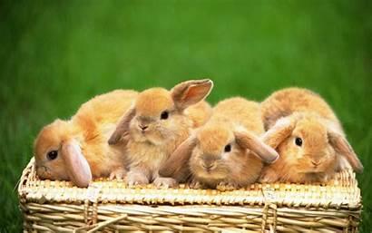 Desktop Rabbit Wallpapers Bunny Bunnies Anime Easter
