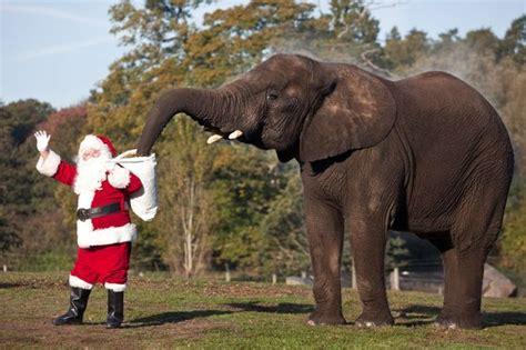 is the santa safari at west midland safari park any good