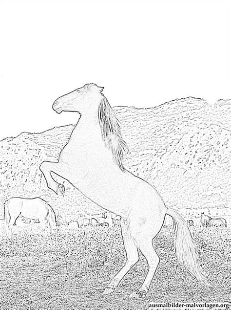 ostwind pferd ausmalbilder kostenlos und gratis malvorlagen