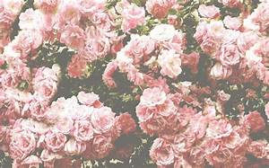 Pink And White Roses Tumblr Background 1 HD Wallpapers ...