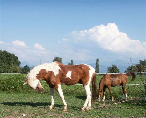 meine pferdeoffenstallreitbeteiligungwesternreiten