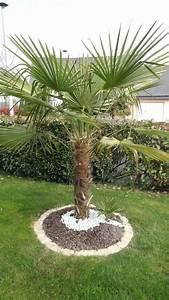 Palmier De Jardin : jardin avec palmier palmier best of best images on jardin ~ Nature-et-papiers.com Idées de Décoration