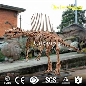 Jurassic Dinosaur World Spinosaurus Skeleton Model