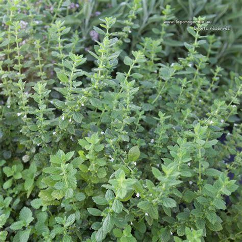 plante aromatique cuisine plants d 39 aromatiques bio le potager bio