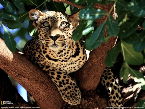 amazing jaguar s encyclopaedia of babies of beautiful animals