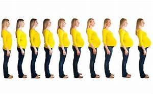 8 Ss Monat : gewichtszunahme in der schwangerschaft liliput lounge ~ Frokenaadalensverden.com Haus und Dekorationen