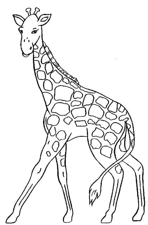 giraffe clipart  clipartingcom