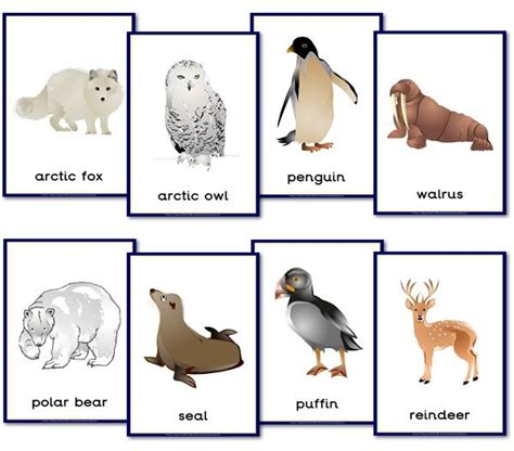 polar animal themed posters happy learners resources 577 | 66eb8f8a44d7d6efd5f8b798d090bedf