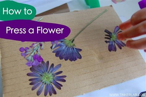 how to press flowers the weekend look book modern parents messy kids