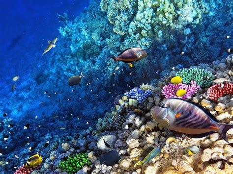 ocean seabed reef exotic marine fish desktop wallpaper