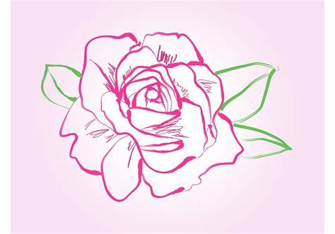 rose drawing vector   vector art stock