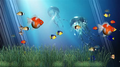 Animated Coral Reef Wallpaper - coral reef aquarium animated wallpaper