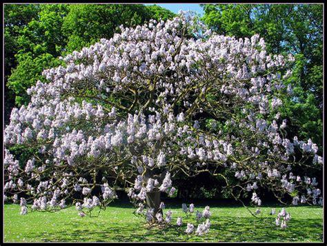 arbres et arbustes d ornements sp 233 ciales jardin en