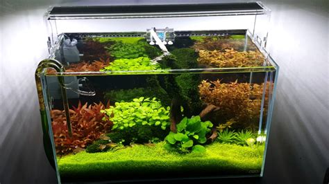 p planted tank youtube