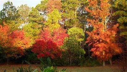Fall Foliage Autumn Trees Colors Bern Z31
