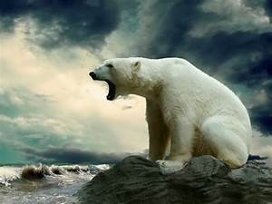 Polar Bear Arctic Sea Animals Storm Wall Print POSTER   eBay
