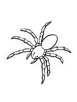 spiders arachnids coloring pages  printable activities