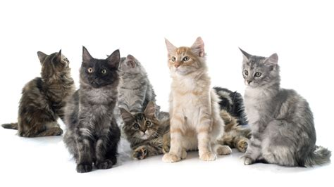 Find A Pet To Adopt City Of Mission Viejo