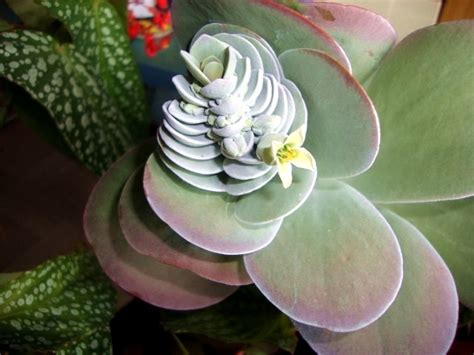 Plants with unusual flowers and emissions of a beautiful