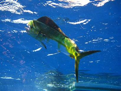 Fishing Saltwater Offshore Sea Deep Wallpapers Types