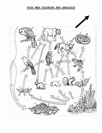 Chain Coloring Science Worksheets Sheet Grade Printable