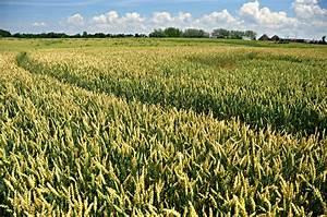 5 Reasons To Care About Biofuels - Kuli Kuli Foods