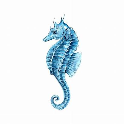 Seahorse Watercolor Painting Drawing Clipart Hippocampus Sea