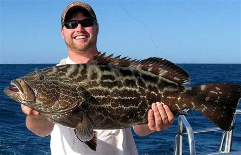 grouper fish florida freshwater species there catch fishing sea spanish key west floridasportsman