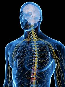 30 Ways To Stimulate Your Vagus Nerve   Functions