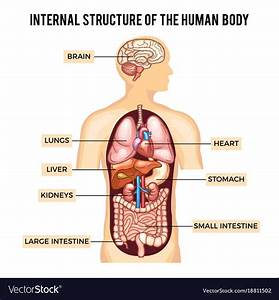 Show Picture Of Human Body Organs