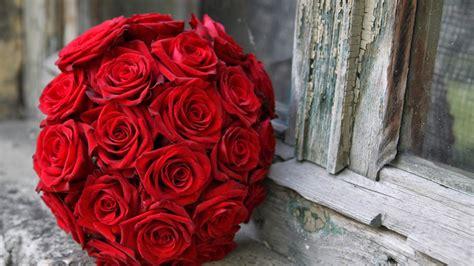 gambar keren bunga mawar merah gambar keren