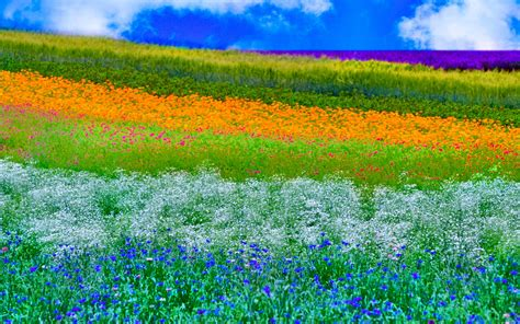 31+ Hd Spring Wallpapers, Backgrounds, Images Design