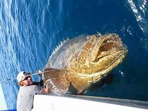 Fort Myers Fishing Report: Feb. 2017 | Coastal Angler ...